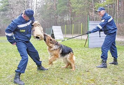 Отработка элементов задержания нарушителя с использованием служебной собаки Джесси