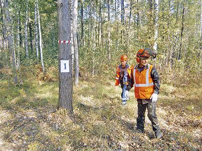 Опасные или больные деревья берутся на учет и подлежат немедленной очистке